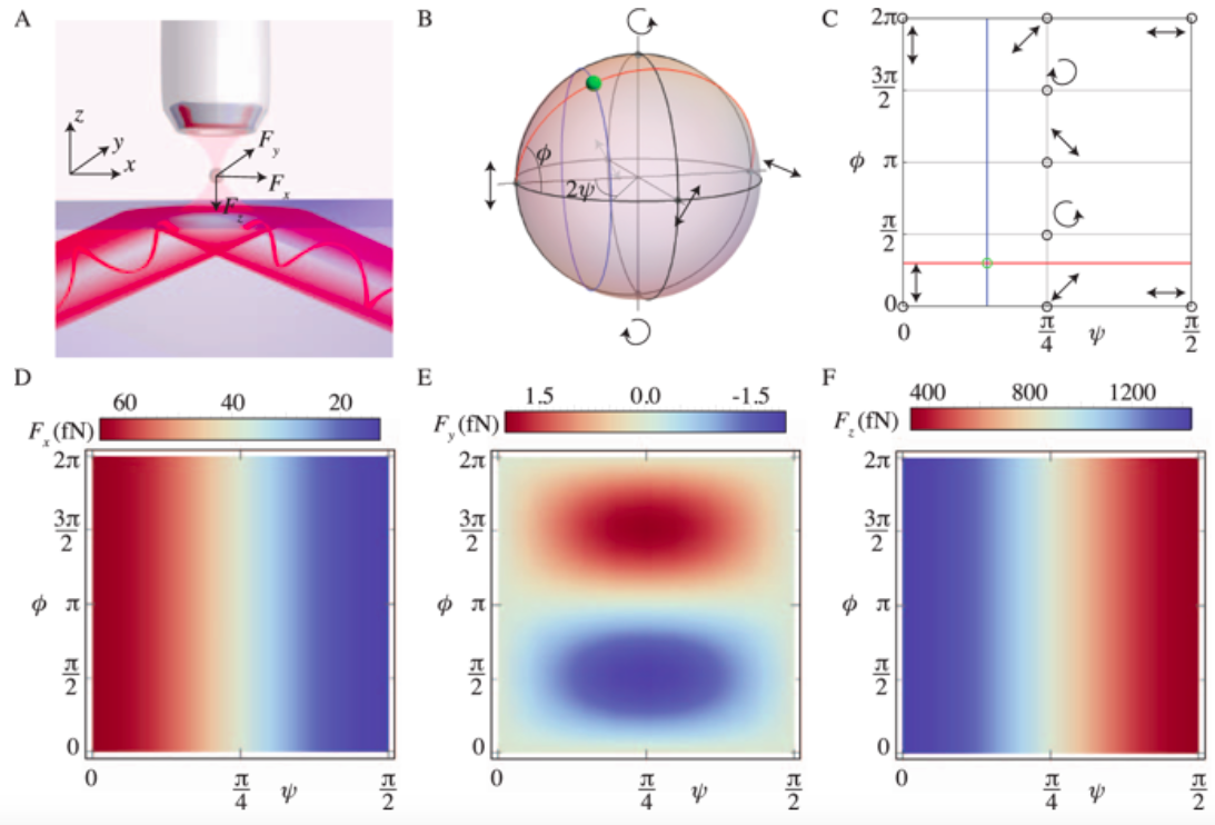 Using the belinfante momentum to retrieve the polarization state of light inside waveguides